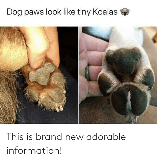 Information, Adorable, and Brand New: Dog paws look like tiny Koalas This is brand new adorable information!