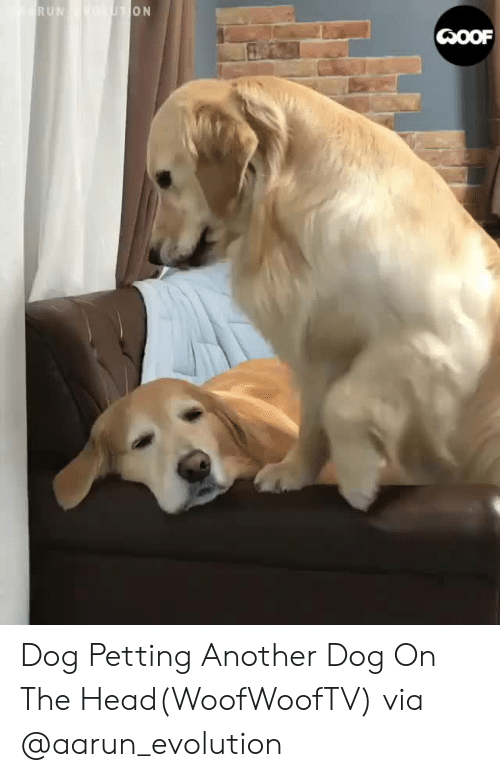 Facebook, Head, and Instagram: Dog Petting Another Dog On The Head(WoofWoofTV)via @aarun_evolution