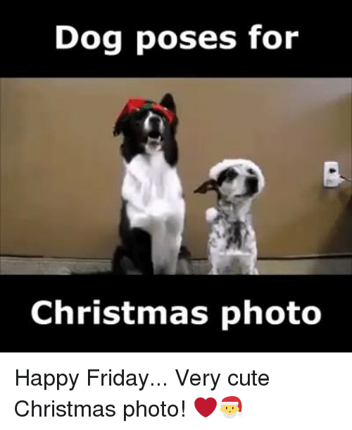 Dog Poses For Christmas Photo Happy Friday Very Cute Christmas Photo