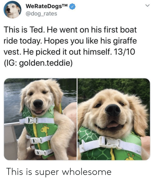 Ted, Giraffe, and Today: @dog_rates  This is Ted. He went on his first boat  ride today. Hopes you like his giraffe  vest. He picked it out himself. 13/10  (IG: golden.teddie) This is super wholesome