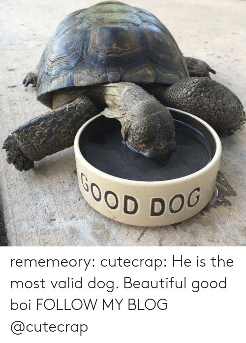 Beautiful, Tumblr, and Blog: DOG rememeory:  cutecrap:  He is the most valid dog. Beautiful good boi  FOLLOW MY BLOG @cutecrap