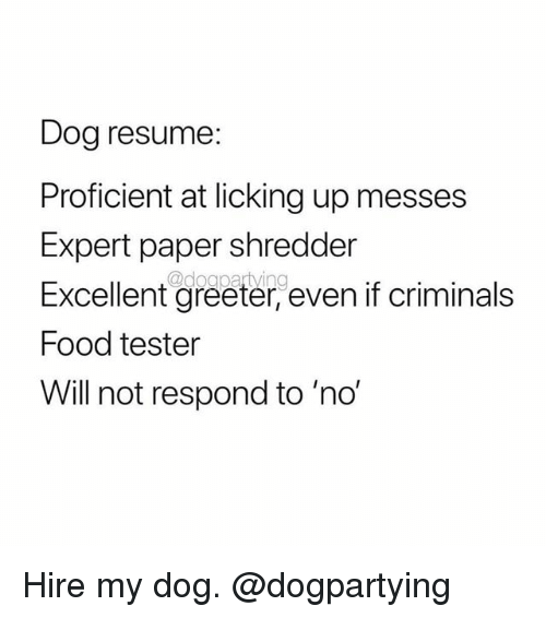Food, Memes, and Resume: Dog resume:  Proficient at licking up messes  Expert paper shredder  Excellent greeter, even if criminals  Food tester  Will not respond to 'no' Hire my dog. @dogpartying