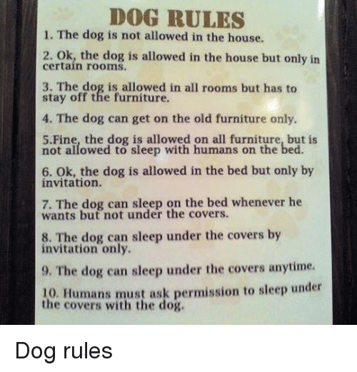 Dog Rules 1 The Is Not Allowed In