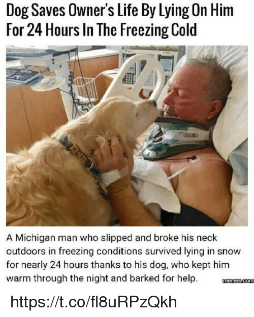 Life, Memes, and Help: Dog Saves Owner's Life By Lying On Him  For 24 Hours In The Freezing Cold  A Michigan man who slipped and broke his neck  outdoors in freezing conditions survived lying in snow  for nearly 24 hours thanks to his dog, who kept him  warm through the night and barked for help. mnmscom https://t.co/fl8uRPzQkh