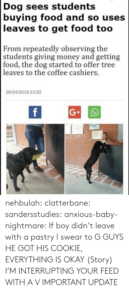 Food, Money, and Tumblr: Dog sees students  buying food and so uses  leaves to get food too  From repeatedly observing the  students giving money and getting  food, the dog started to offer tree  leaves to the coffee cashiers.  28/04/2018 13:50 nehbulah: clatterbane:  sandersstudies:   anxious-baby-nightmare:  If boy didn't leave with a pastry I swear to G  GUYS HE GOT HIS COOKIE, EVERYTHING IS OKAY   (Story)  I'M INTERRUPTING YOUR FEED WITH A V IMPORTANT UPDATE