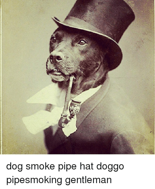 Dog smoking pipe