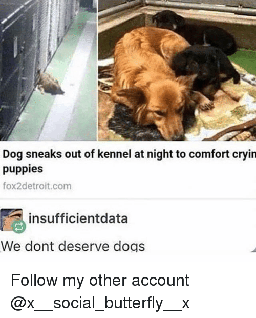 Best Memes About Puppies Puppies Memes - Dog escapes from kennel to comfort abandoned crying puppies