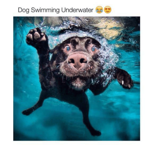 dog swimming underwater 28751878 dog swimming underwater swimming meme on me me