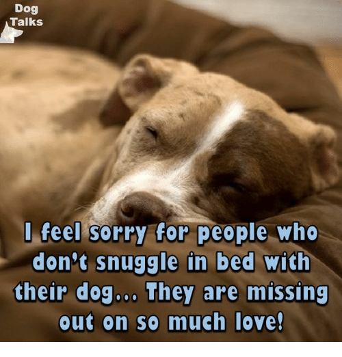 Dogs, Love, and Memes: Dog  Talks  feel sorry for people who  don't snuggle in bed with  their dog... They are missing  out on so much love!