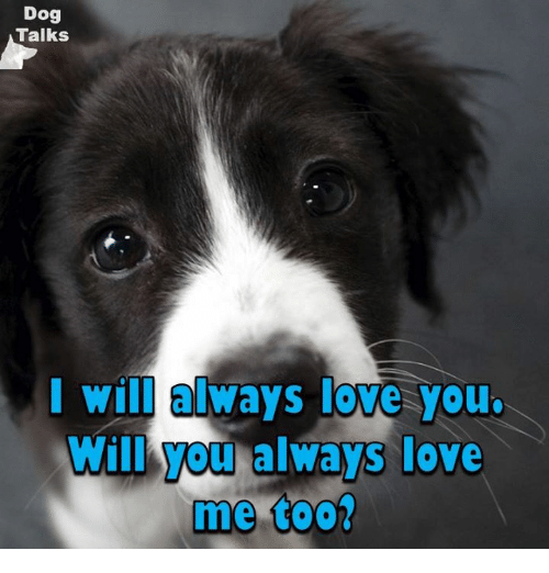 dog talks i will always love you will you always 5779025 ✅ 25 best memes about i will always love you i will always,I Will Always Love You Meme