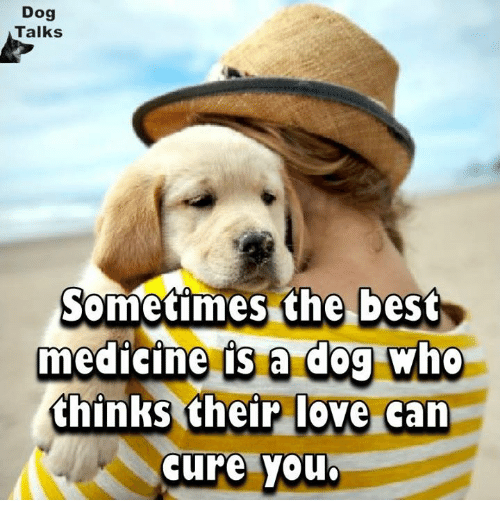 Love, Memes, and Best: Dog  Talks  Sometimes the best  medicine is a dog who  thinks their love can  cure you