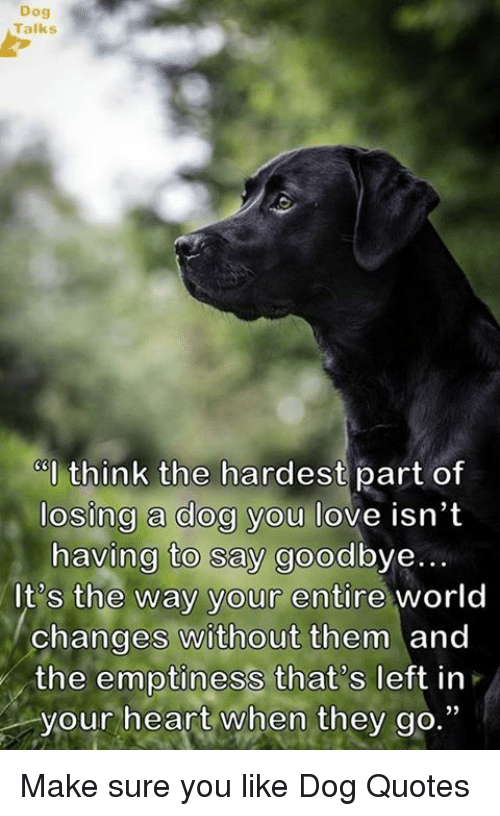 Dog Talks Think The Hardest Part Of Losing A Dog You Love Isnt