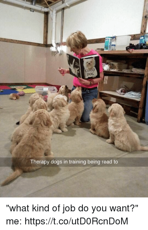 "Dogs, Funny, and Awkward: DOG  Therapy dogs in training being read to ""what kind of job do you want?"" me: https://t.co/utD0RcnDoM"