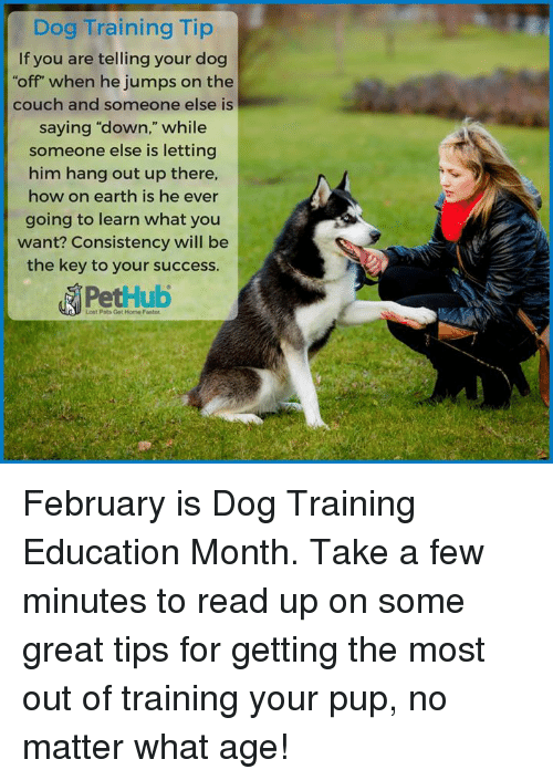 Dog Training Education Month