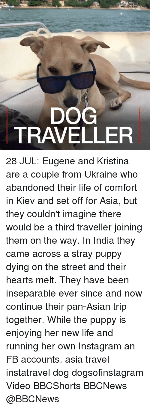 Asian, Instagram, and Life: DOG  TRAVELLER 28 JUL: Eugene and Kristina are a couple from Ukraine who abandoned their life of comfort in Kiev and set off for Asia, but they couldn't imagine there would be a third traveller joining them on the way. In India they came across a stray puppy dying on the street and their hearts melt. They have been inseparable ever since and now continue their pan-Asian trip together. While the puppy is enjoying her new life and running her own Instagram an FB accounts. asia travel instatravel dog dogsofinstagram Video BBCShorts BBCNews @BBCNews