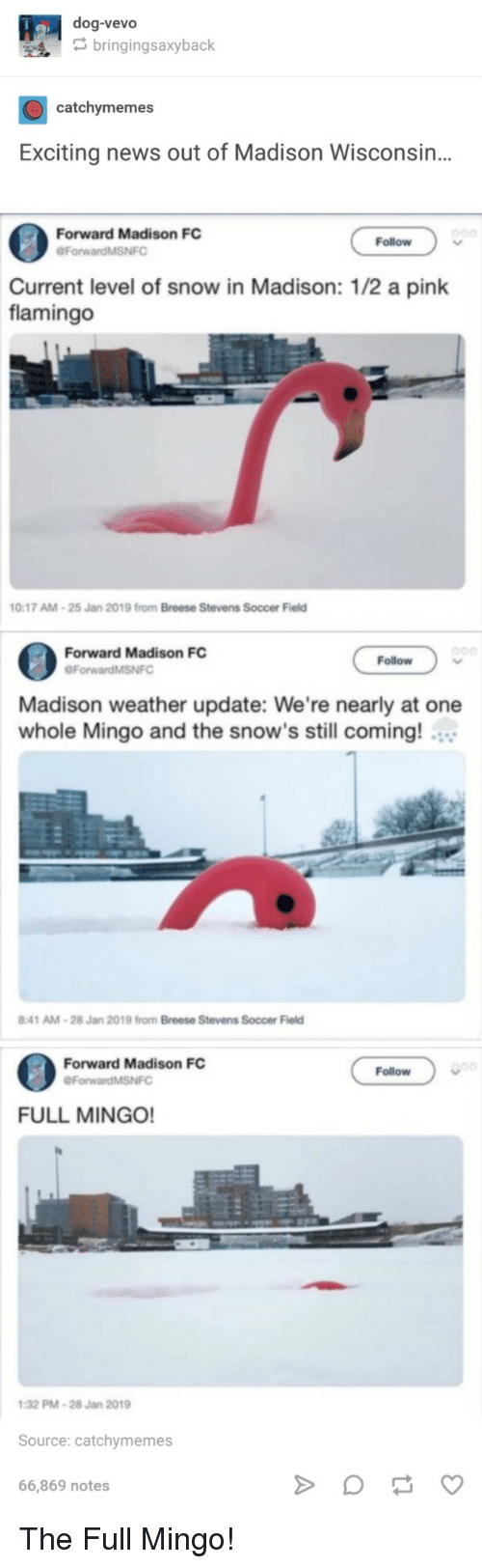 News, Soccer, and Pink: dog-vevo  bringingsaxyback  catchymemes  Exciting news out of Madison Wisconsin..  Forward Madison FC  ForwardMSNFO  Follow  Current level of snow in Madison: 1/2 a pink  flamingo  0:17 AM-25 Jan  2019 from Breese Stevens  Soccer Field  Forward Madison FC  Follow  Madison weather update: We're nearly at one  whole Mingo and the snow's still coming!  :41 AM-28 Jan 2019 from Breese Stevens Soccer Field  Forward Madison FC  Follow  ForwardMSNFC  FULL MINGO!  32 PM-28 Jan 2019  Source: catchymemes  66,869 notes The Full Mingo!