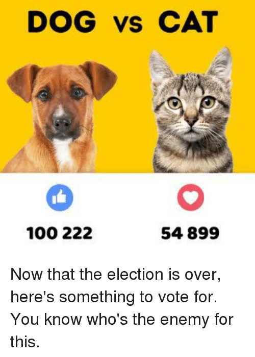 dog vs cat 100 222 54 899 now that the election is over here s