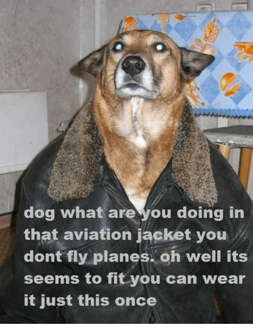 dog what are you doing in that aviation jacket you 7827250 ✅ 25 best memes about usman khawaja usman khawaja memes