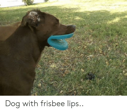 Dog, Frisbee, and  Lips: Dog with frisbee lips..