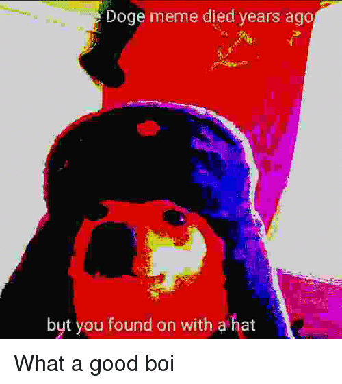Doge, Meme, and Good: Doge meme died years ago  but you found on with a hat