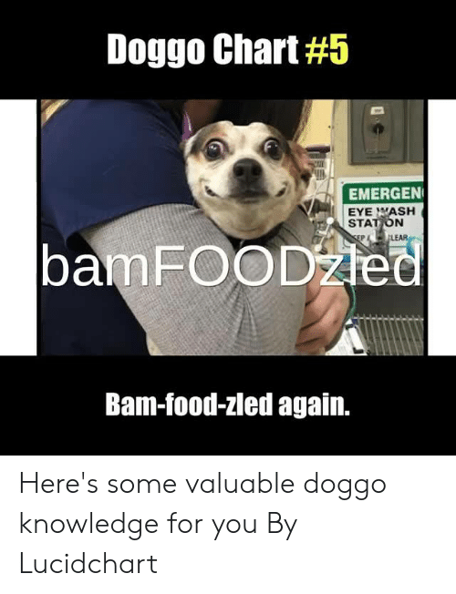 Dank, Food, and Knowledge: Doggo Chart #5  EMERGEN  EYE WASH  STATION  bamFOODžed  LEAR  Bam-food-zled again. Here's some valuable doggo knowledge for you  By Lucidchart