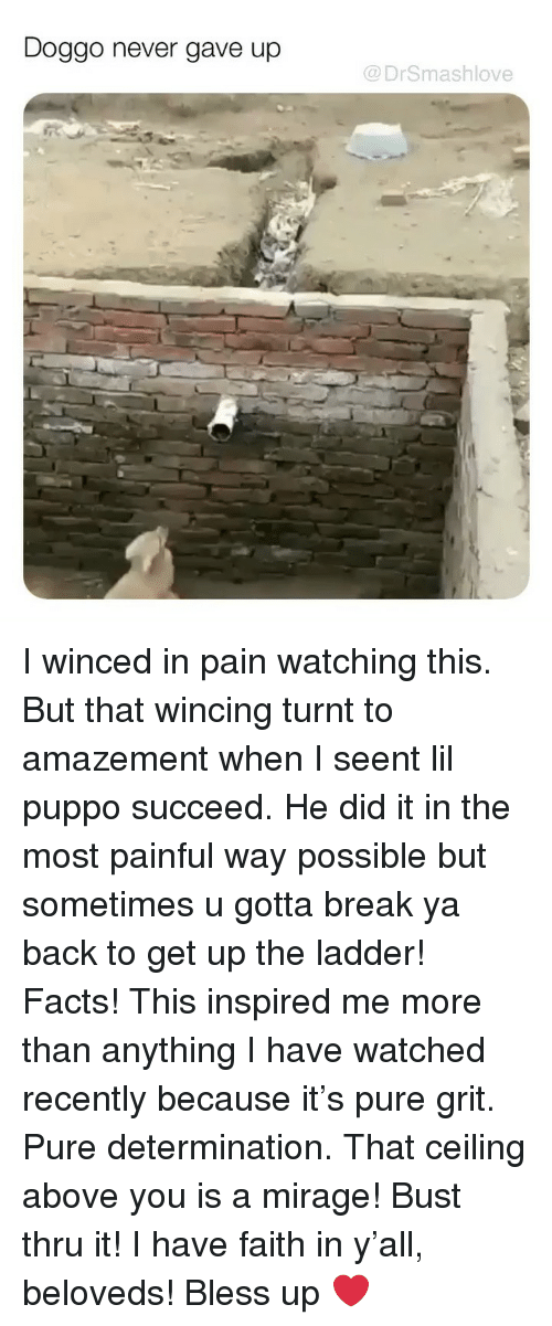 Bless Up, Facts, and Memes: Doggo never gave up  @DrSmashlove I winced in pain watching this. But that wincing turnt to amazement when I seent lil puppo succeed. He did it in the most painful way possible but sometimes u gotta break ya back to get up the ladder! Facts! This inspired me more than anything I have watched recently because it's pure grit. Pure determination. That ceiling above you is a mirage! Bust thru it! I have faith in y'all, beloveds! Bless up ❤️