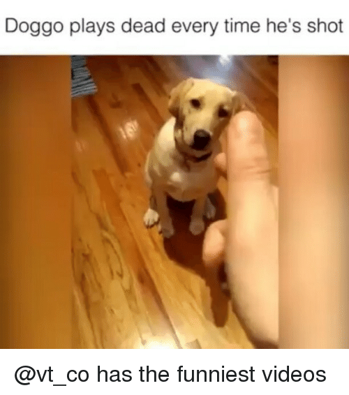 Funny, Videos, and Time: Doggo plays dead every time he's shot @vt_co has the funniest videos
