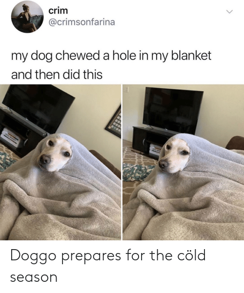 Cold, Doggo, and For: Doggo prepares for the cöld season