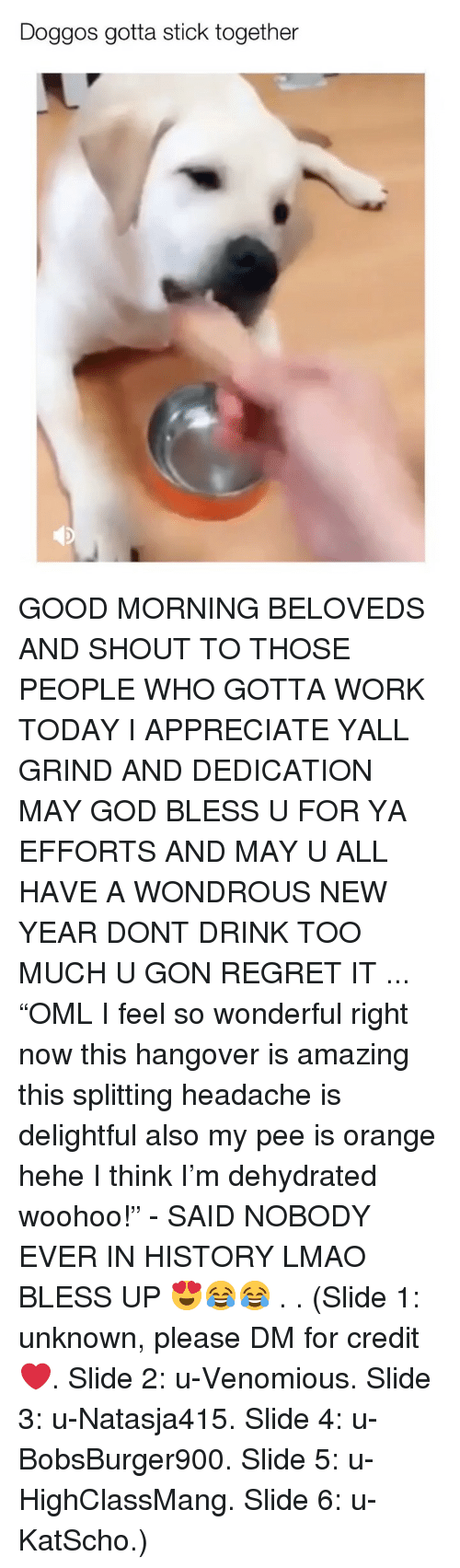 "Bless Up, God, and Lmao: Doggos gotta stick together GOOD MORNING BELOVEDS AND SHOUT TO THOSE PEOPLE WHO GOTTA WORK TODAY I APPRECIATE YALL GRIND AND DEDICATION MAY GOD BLESS U FOR YA EFFORTS AND MAY U ALL HAVE A WONDROUS NEW YEAR DONT DRINK TOO MUCH U GON REGRET IT ... ""OML I feel so wonderful right now this hangover is amazing this splitting headache is delightful also my pee is orange hehe I think I'm dehydrated woohoo!"" - SAID NOBODY EVER IN HISTORY LMAO BLESS UP 😍😂😂 . . (Slide 1: unknown, please DM for credit ❤️. Slide 2: u-Venomious. Slide 3: u-Natasja415. Slide 4: u-BobsBurger900. Slide 5: u-HighClassMang. Slide 6: u-KatScho.)"