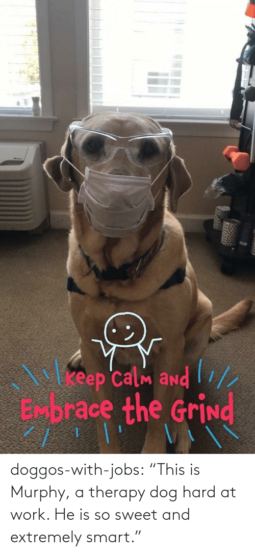 """Tumblr, Work, and Blog: doggos-with-jobs:  """"This is Murphy, a therapy dog hard at work. He is so sweet and extremely smart."""""""