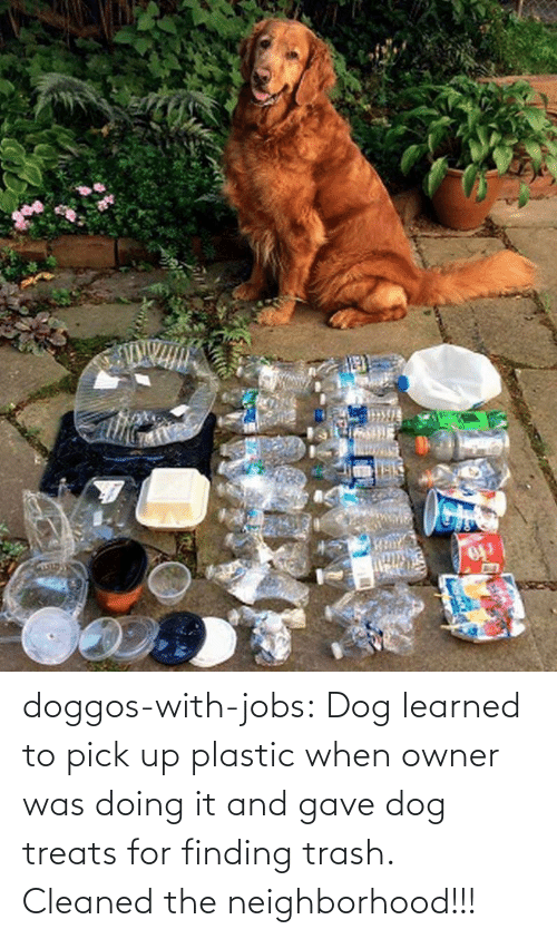 Trash, Tumblr, and Blog: doggos-with-jobs: Dog learned to pick up plastic when owner was doing it and gave dog treats for finding trash. Cleaned the neighborhood!!!
