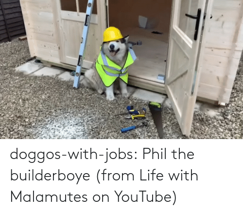 Doggos With Jobs Phil The Builderboye From Life With Malamutes On Youtube Life Meme On Me Me Ever wondered why phils tail is so tiny? doggos with jobs phil the builderboye
