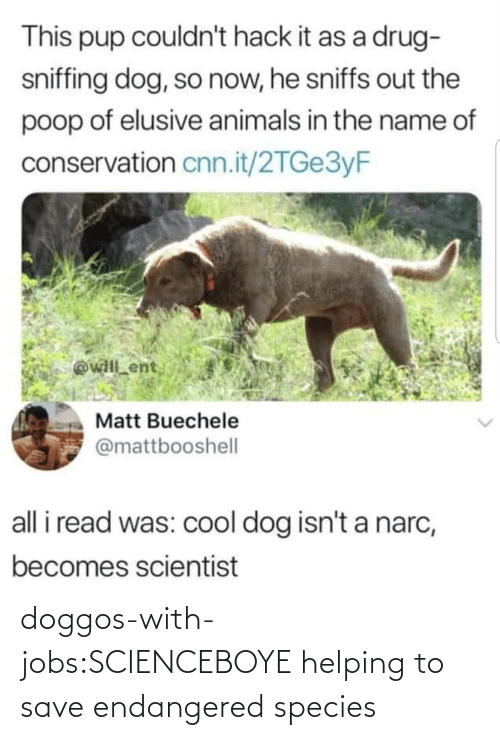 Tumblr, Blog, and Jobs: doggos-with-jobs:SCIENCEBOYE helping to save endangered species