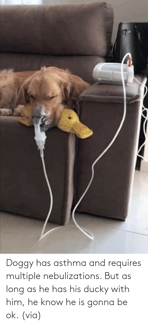 Aww, Reddit, and Target: Doggy has asthma and requires multiple nebulizations. But as long as he has his ducky with him, he know he is gonna be ok.(via)