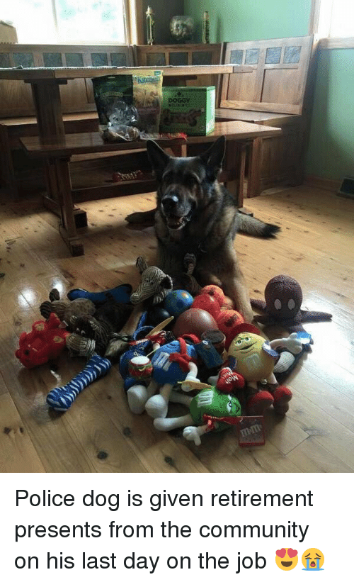 Presents From The Dog Part - 34: Memes, ?, And The Community: DOGGY Police Dog Is Given Retirement Presents  From