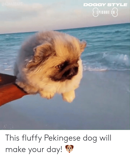 Dank, Doggy Style, and 🤖: DOGGY STYLE  EPISODE 28 This fluffy Pekingese dog will make your day! 🐶