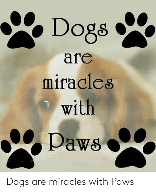 Dogs, Memes, and Miracles: Dogs  afe  mifacles  with Dogs are miracles with Paws