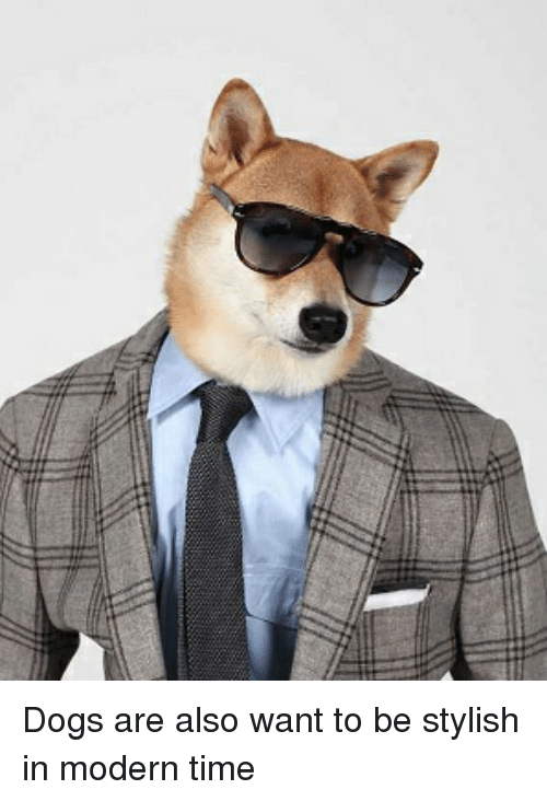 Dogs, Time, and Stylish