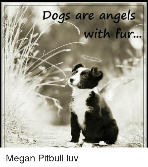 Dogs Are Angels With Fur Megan Pitbull Luv | Dogs Meme on ME ME
