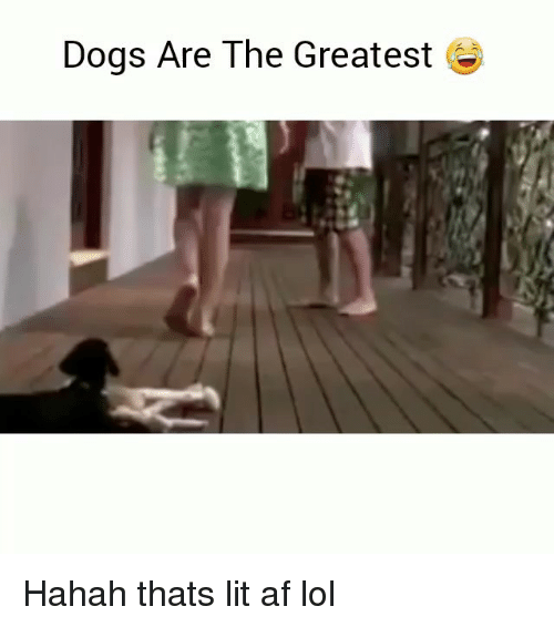 Af, Dogs, and Funny: Dogs Are The Greatest Hahah thats lit af lol