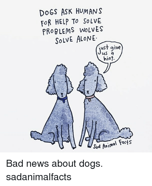 Being Alone, Bad, and Dogs: DoGS ASK HUMANS  FoR HELP To SoLVE  PROBLEMS WoLvES  SoLVE ALoNE  ust give  MS q  hint  Jad Animal facts Bad news about dogs. sadanimalfacts