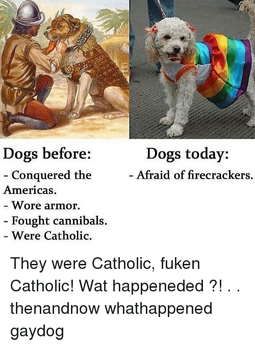 Dogs Before Conquered the Americas Wore Armor Fought Cannibals Were