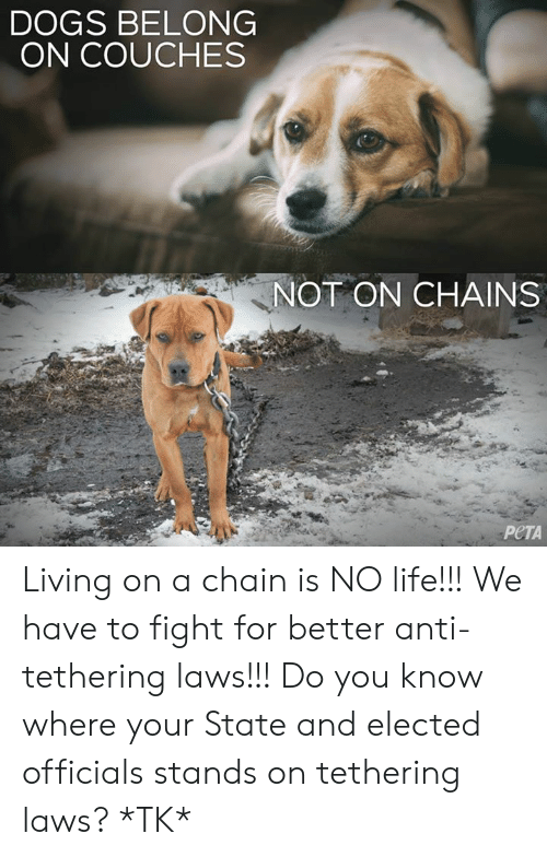 Dogs, Life, and Memes: DOGS BELONG  ON COUCHES  NOT ON CHAINS  PeTA Living on a chain is NO life!!! We have to fight for better anti-tethering laws!!! Do you know where your State and elected officials stands on tethering laws? *TK*