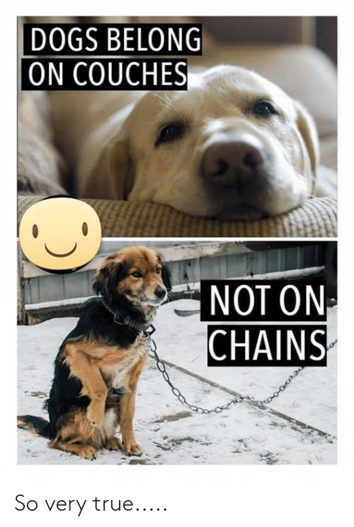 Dogs, Memes, and True: DOGS BELONG  ON COUCHES  NOT ON  CHAINS So very true.....