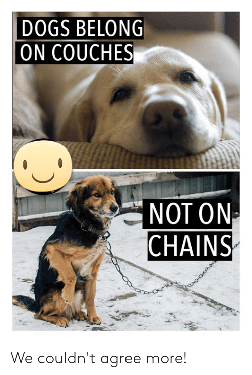 Dogs, Memes, and 🤖: DOGS BELONG  ON COUCHES  NOT ON  CHAINS We couldn't agree more!