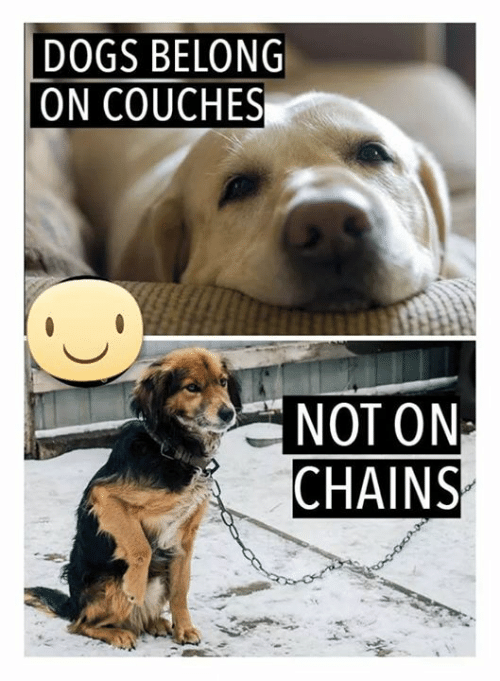 Dogs, Memes, and 🤖: DOGS BELONG  ON COUCHES  NOT ONA  CHAINS