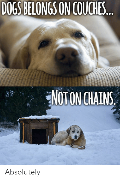 Dogs, Memes, and 🤖: DOGS BELONGS ON COUCHES  NOTON CHAINS Absolutely