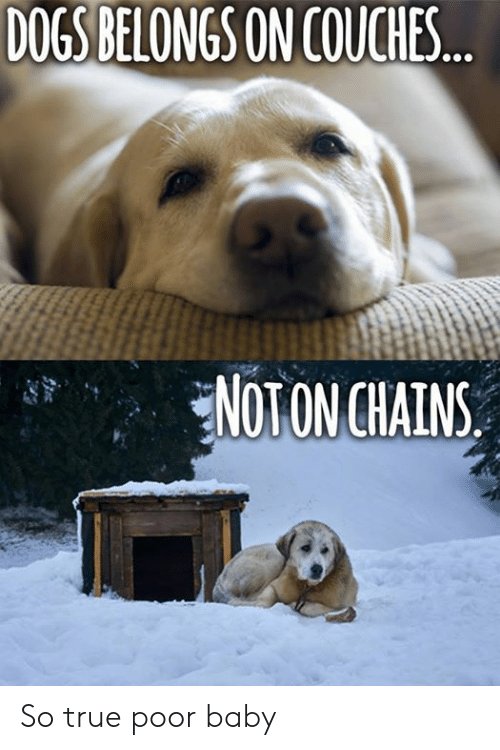 Dogs, Memes, and True: DOGS BELONGS ON COUCHES  NOTONCHAINS So true  poor baby