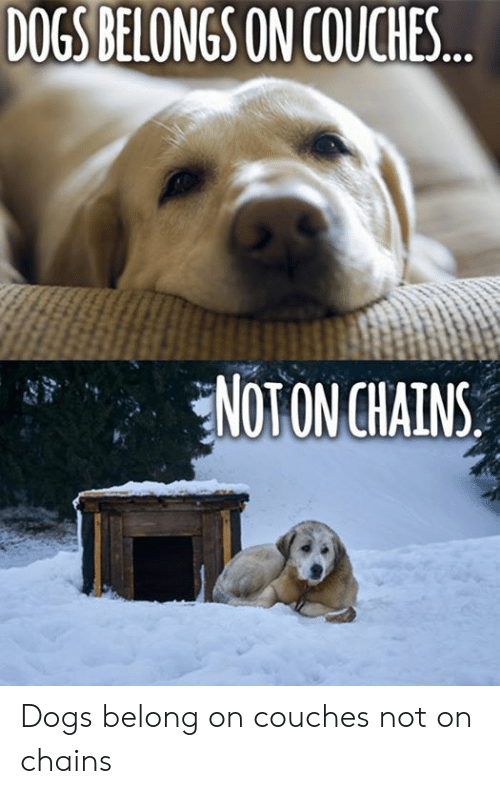 Dogs, Memes, and 🤖: DOGS BELONGS ON COUCHES  NTON CHAINS Dogs belong on couches not on chains