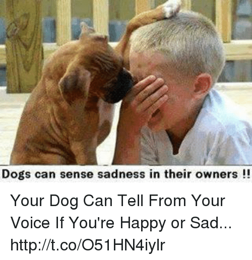 Dogs Can Sense Sadness in Their Owners!! Your Dog Can Tell From ...